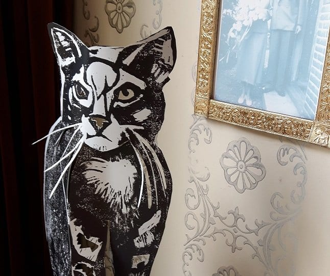 krabbende katten op je nieuwe bank hoe ga jje daarmee om#katten op je bank#krabbende katten